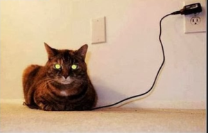 charging the cat