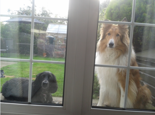 Daisy and Laddie