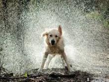 Bad Jokes: DogEdition