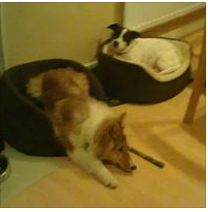 Dog Bed before.png
