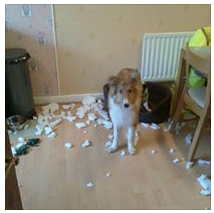 Dog Bed exploded!