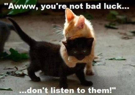 bad luck cats - image courtesy of google