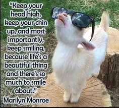 Marylin Monroe - Quote.