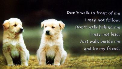 Walk beside me by my friend - dog picture