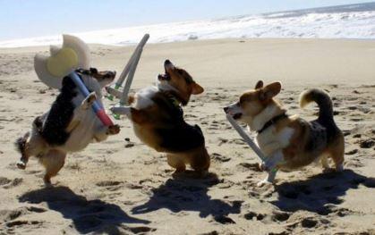dog battle funny