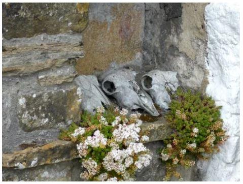 Pale Bones photo by Sue Vincent