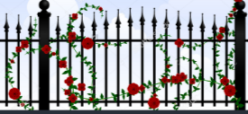 fence with roses