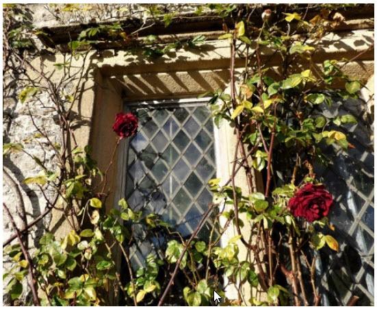 The Story of Rose –#Writephoto