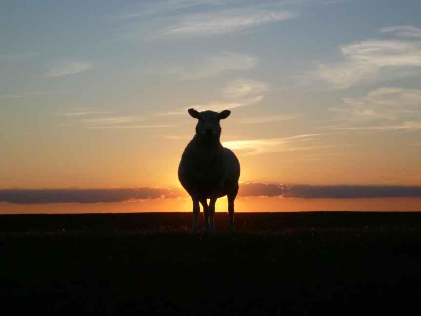 The Shelter of the Shepherd –#writephoto